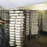 Manutention salle de fromages en salage