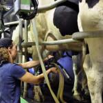 Eleveuse en salle de traite des vaches