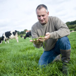 Eleveur herbe prairie vache prim'holstein