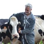 Homme et vache
