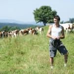 Un éleveur et son troupeau de montbéliardes