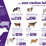Panneau exploitant : De la vache aux vaches laitières