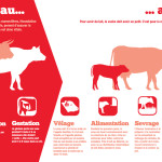 Panneau exploitant : Du veau au lait