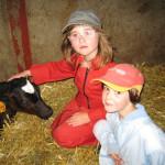 Des enfants et un veau