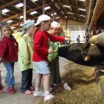 Des enfants dans une ferme caressant une vache