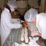 Fabrication de yaourts laiterie