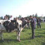Professeur et élèves dans champ avec prim'holstein