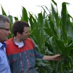 conseiller vaches maïs fournisseur