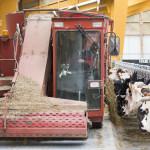 Matériel distribution d'alimentation vaches