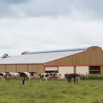 Batiment stabulation prairie vaches normandes