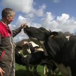 Eleveur et Prim'Holstein au pré