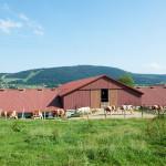 Ferme vaches chemin prairie Doubs