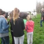 Etudiants et éléveur champ vache