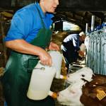 Responsable-Exploitation buvée des veaux
