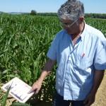 Eleveur dans champ de maïs montrant fiche
