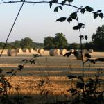 Ballots de paille dans champs le soir Ferme de l'écrin