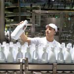 Homme chaine embouteillage lait