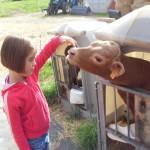 Enfant et veau