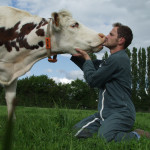 Eleveur et vache normande bisou