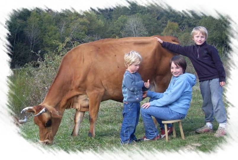 Enfants et vache style photo
