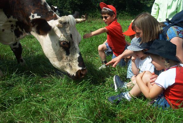 Enfants et vache normande à la Puillière