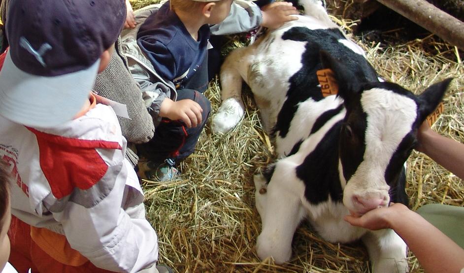 veau et enfants