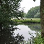 étang eau vaches prim'holstein
