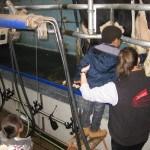 Enfants visite salle de traite
