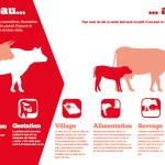 Panneau 'exploitation laitière' 3 : Du veau au lait