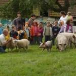 Visite pédagogique, enfants, éleveur cochons et brebis, Lieu Roussel