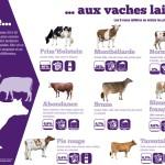 Panneau 'exploitation laitière' 1 : De la vache aux vaches laitières