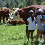 Enfants avec vaches Abondance dans prairie, champs, visite pédagogique