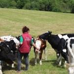 eleveuse dans prairie avec vaches prim holstein