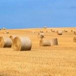Ballots de paille dans champ, récolte, ciel bleu, moisson