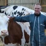 Homme caressant vache ds stabulation