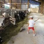 enfant repousse l'alimentation aux vaches avec balai ds stabulation