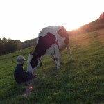 Vache Prim Hostein dans pré, avec enfant