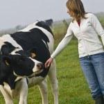 Femme et vache prim'holstein dans champ