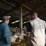 Conseiller élevage dans stabulation avec éleveur