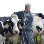 Eleveur et vache caresse
