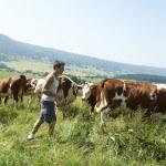 Jeune éleveur dans pré avec troupeau de Montbéliardes