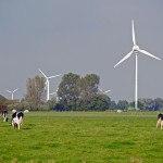 éoliennes et vaches prim'Holstein dans champ, pré