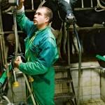 Vacher, éleveur dans salle de traite, vache prim'Holstein