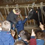 classe d'enfants, visite pédagogique, devant vache Prim Holstein dans la stabulation