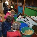 classe d'enfants, visite pédagogique, devant les veaux, nurserie