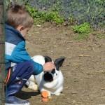 enfant, visite pédagogique caressant un lapin