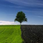 tree-4152684_1920