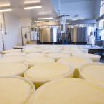 Usine de fromages, moules, tommes, tank